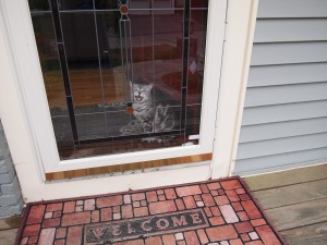 My boyfriend Gordon, he follows me from window to door anytime i am outside.  See me there in the reflection?  heh