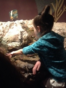 The touch tank we all grew up with.  Still a fun place to touch starfish and spider crabs.
