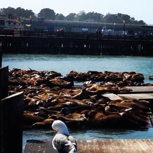 Then we hung out with the bay sea lions for a bit. they were so cute!