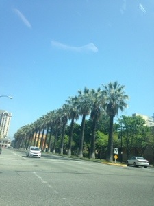 We made it to San Jose, and we were greeted with palm trees and 70 degrees. It was beautiful.