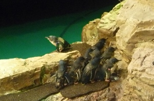 They had a section off to the right hand side quartened off for baby penguins. So sweet.