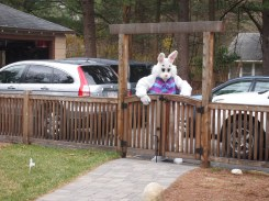 Oh look! The Bunny is coming!