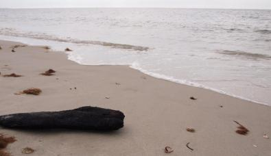 Then I found burnt driftwood along the shore