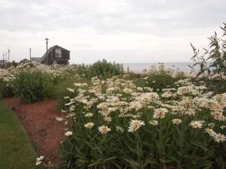 Flowers along the resort