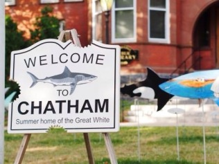 So Chatham had a great exhibition out in the park Sharks in the Park...personalized shark forms for sale.