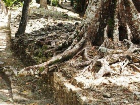 Super cool roots spilling out over everything.