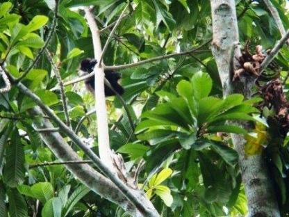 Then we saw a monkey!