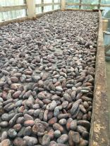 Cocoa beans....Then you dry them out.