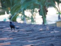 I loved these black birds on our roof.