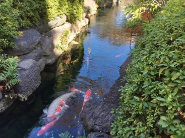 Koi at the Asakusa Sensoji Temple