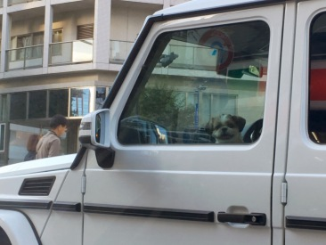 This dog smiling at us was too cute for words