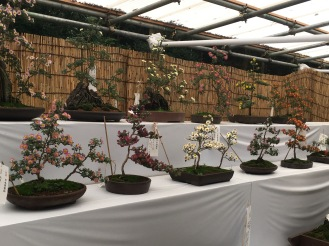 bonsai set up along path