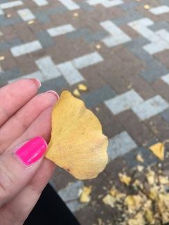 Ginko Leaves in Tokyo