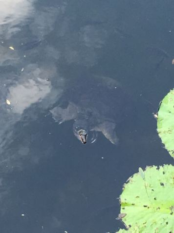 Made a stop on the bridge and our little one spotted a turtle!