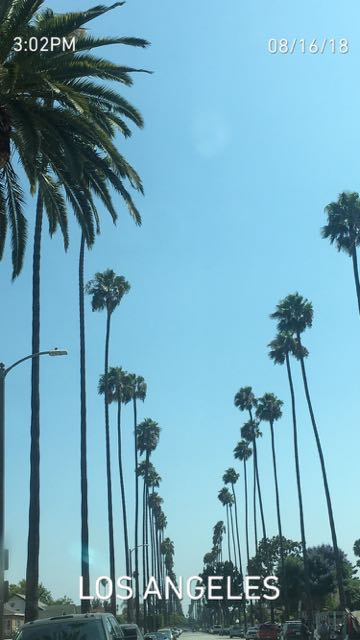 Palm Trees along our drive