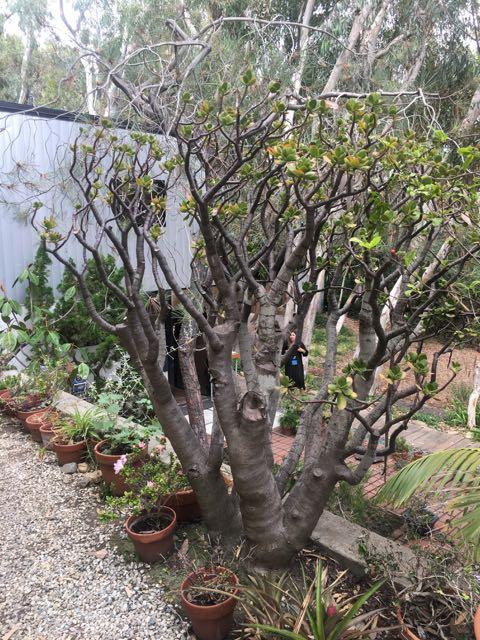 The trees around Eames House