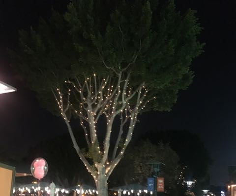 Downtown Disney- Pixar Fest- just loved all the perfectly trimmed and lit trees.