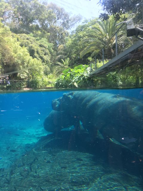 Hippo- Looks like she is leaning on a rock right?