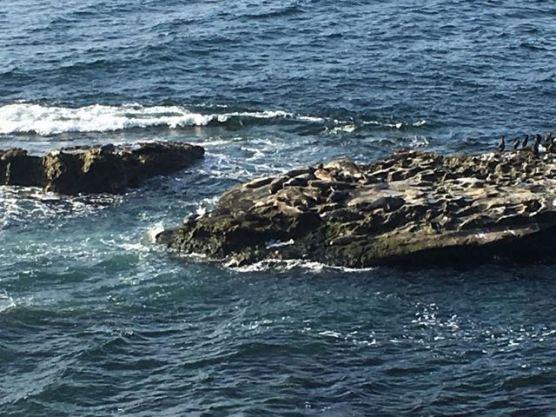 Seals n Sea lions