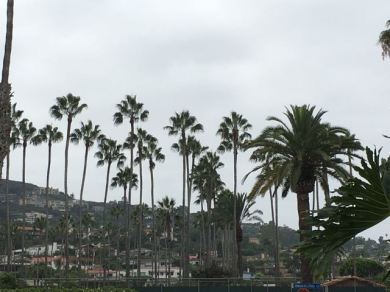 View from our hotel's steps. Palm Trees :)