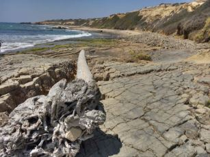 Crystal Cove State Park- driftwood