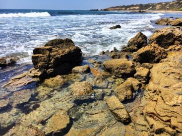 Crystal Cove State Park- tide pools