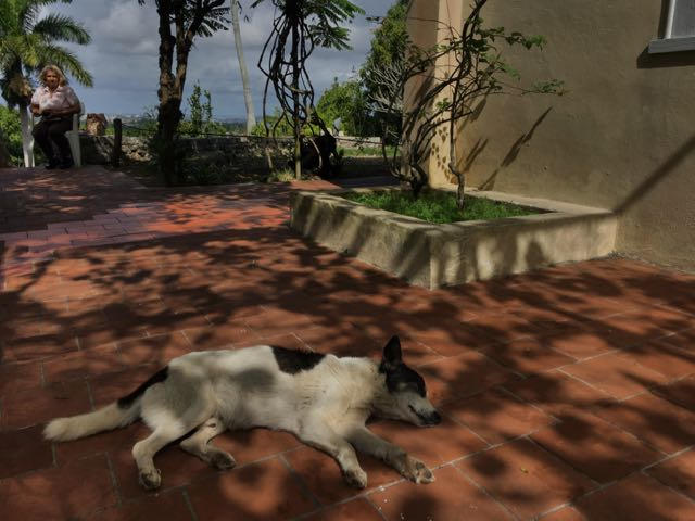 Hemingway House- Cuba- how cute is this dog?