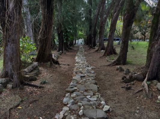 The original driveway up to the house.