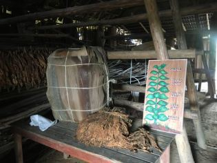 Tobacco Farm- how they grow and dry tobacco for cigars