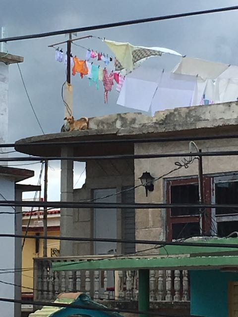 Leaving our casa I noticed a dog on their roof!!
