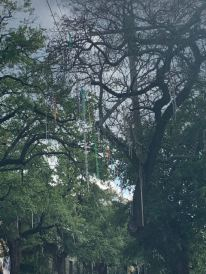 Beads in the trees from Mardi Gras!